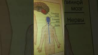 Окружауший мир 3 класс тема организм человека
