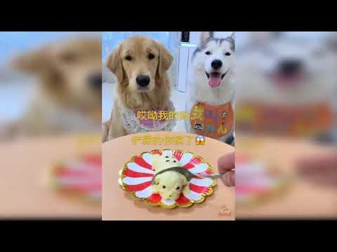 Удивительная реакция собак на торт похоже на щенка.