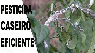 Pesticida Caseiro Acabe com Pulgões, Cochonilhas e Outras Pragas de Vez