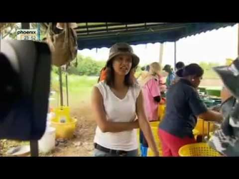 Schmutzige Shrimps aus Thailand
