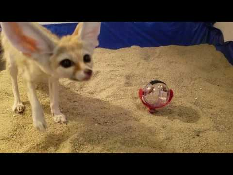 Unboxing Pet Toys & Food