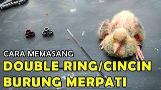 connectYoutube - Cara Memasang Double Ring / Dua Cincin Burung Merpati