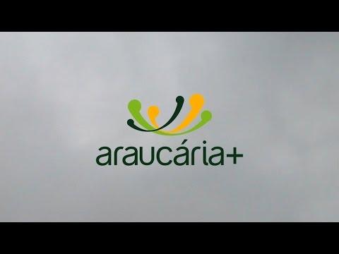 Araucária +
