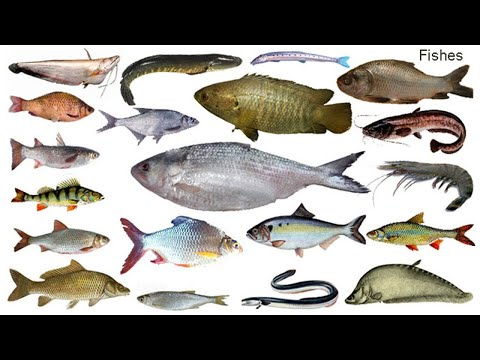 Fish Names Meaning & Picture