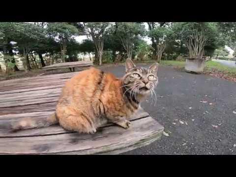 公園で出会ったよく喋る野良猫に腰トントンしてみたら