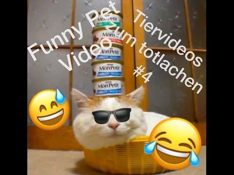 Lustige Tiervideos zum totlachen 2016/2017 / Funny Pet ...