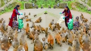 Thank You Madam Monkey To Shared Food For Them