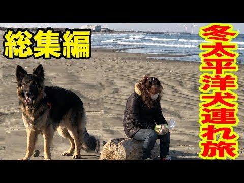 冬の太平洋・犬連れ旅・キャンピングカーでシェパード犬と一緒