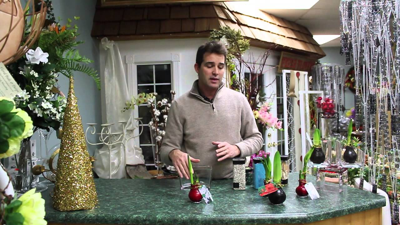 5 minute florals waxed amaryllis bulbs youtube. Black Bedroom Furniture Sets. Home Design Ideas
