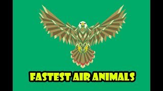 Air Fastest Animals   Fastest Birds   Kids Learning Video