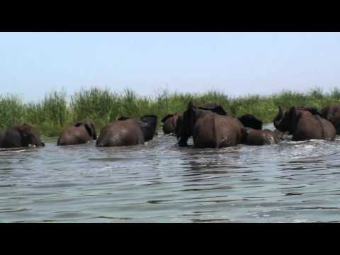 Elephants crossing to Tanzania