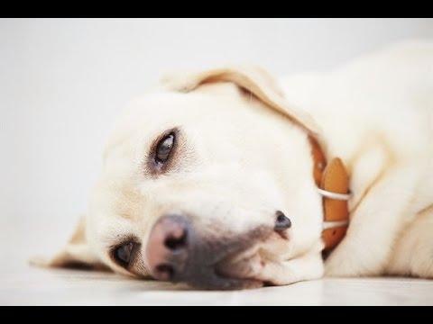 강아지 암 초기증상 7가지