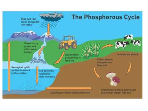Human Impacts on Nutrient Cycles