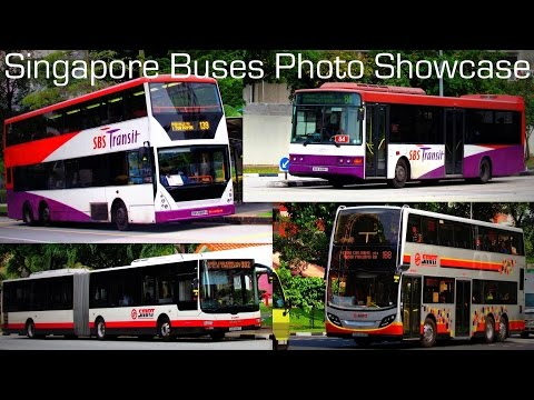Singapore Buses Photo Showcase 2014