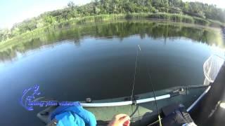Жор окуня, окунь в  июне, рыбалка с лодки на окуня, судака рыбалка на микроджиг..