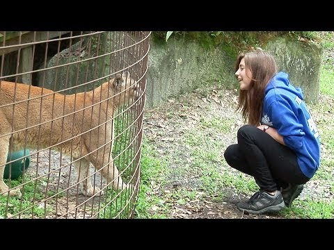 UNDERCOVER INVESTIGATION - Big Cat Rescue, Tampa FL