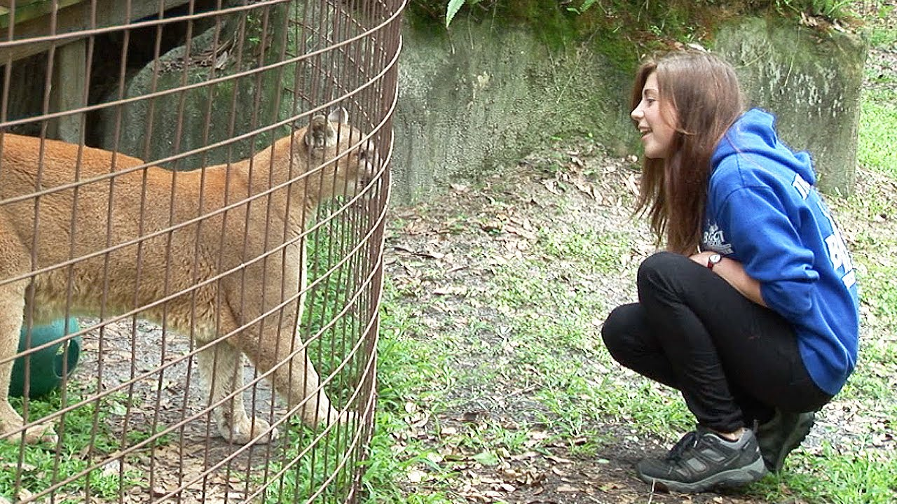 Undercover Investigation Big Cat Rescue Tampa Fl Youtube