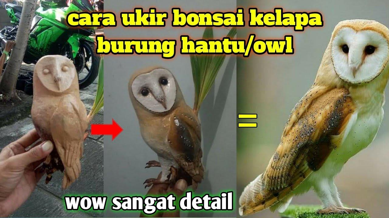 Burung Hantu Di Bonsai Kelapa Coconut Bonsai Owl Youtube
