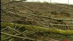 Bilan forêt dévastée de Meurthe et Moselle