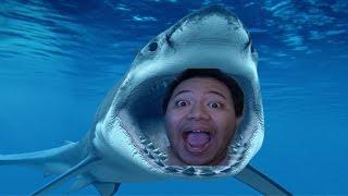 GOVERNMENT WARNING: SHARK ATTACK!!! | Miami Shark
