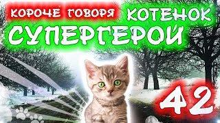КОРОЧЕ ГОВОРЯ, КОТЕНОК СУПЕР ГЕРОЙ 42 / Бездомный котенок Лайки / Вопрос-Ответ