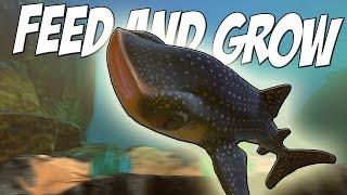 КИТОВАЯ АКУЛА ВСЕХ СЪЕЛА, НОВЫЕ РЫБКИ, ОБНОВЛЕНИЕ   Feed and Grow Fish