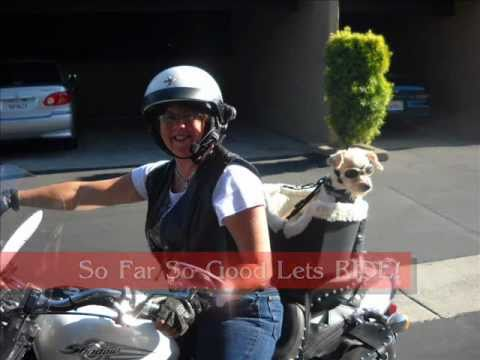 Motorcycle Seats For Small Dogs