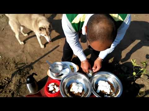 Pet Care - Winter Food for dog - Bhola Shola