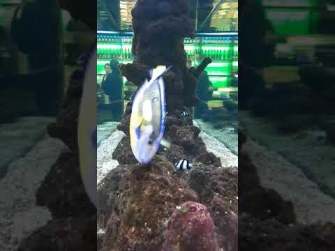 Aquarium in airport Amsterdam