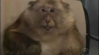 Monkey Sneezing on Letterman Plus Bonus Edits of Slo-Mo, Denis Leary Reaction and the Monkey Sneezing Song
