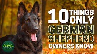 10 Things Only German Shepherd Dog Owners Understand