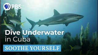 Underwater in Cuba | Soothe Yourself | PBS NATURE