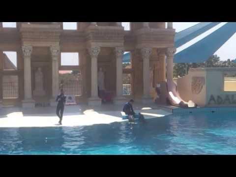 Dolphin show 3, Adaland, Turkey 2013