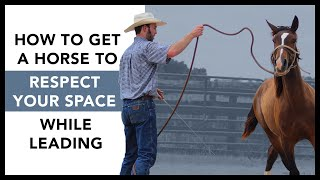 How to get a horse to respect your space while leading- No more crowding