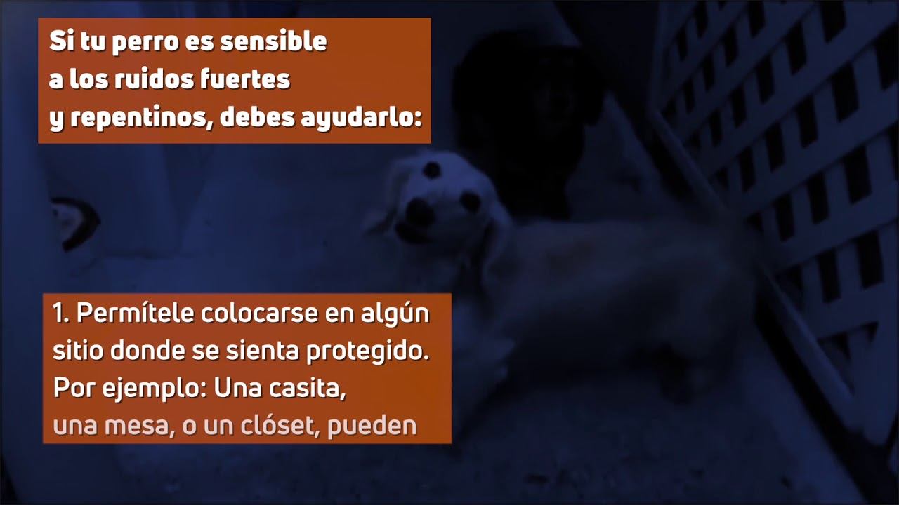 Protege a tus mascotas de los truenos