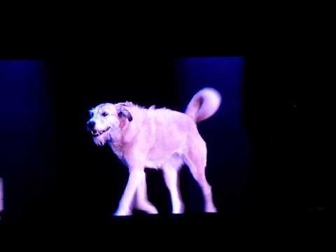 Annie - 10. N.Y.C. (Reprise) by Warbucks, Grace, Annie, Star-to-Be, Chorus @ Hollywood Bowl 7/28/18