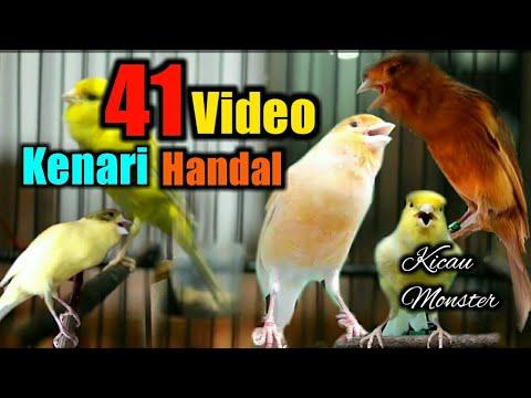 Download Lagu 41 Kenari Hebat