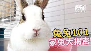 動物星天頻道《兔兔101:家兔大揭密》搶先看 [4K]