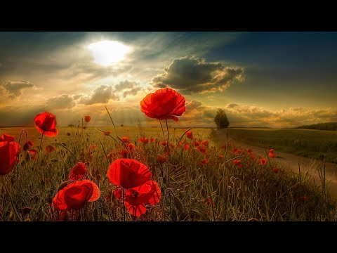 3 HOURS Romantic Relaxing Saxophone Music. Healing Backgroun