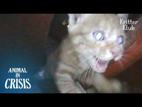 Kitten Trapped In Pillar Believes People'll Hear His Desperate Cry For Help | Animal in Crisis EP101