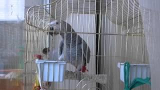 Попугай жако Павлик разговаривает