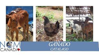 MCNC - Ganado (Spanish)
