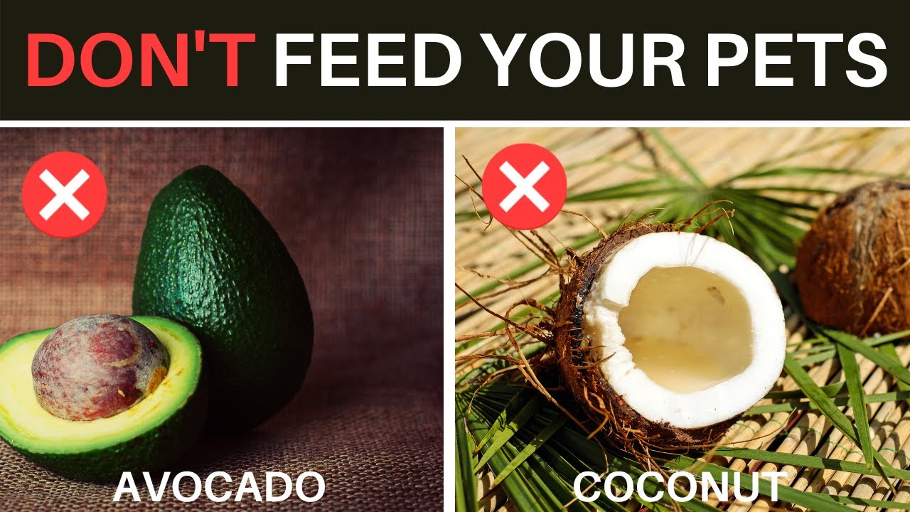 Don't Feed Your Pets These Foods