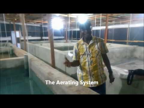 CATFISH FARM RECONSTRUCTION UPGRADE PT2