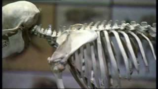 Darwin Big Idea Big Exhibition At The Natural History Museum