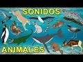 Aprender los animales para niños