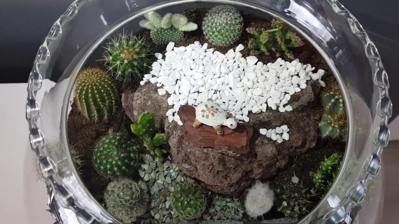 Cactus Terrarium Youtube