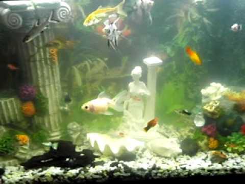 Mi acuario o pecera de 100 litros peces tropicales de agua for Lista de peces tropicales para acuarios