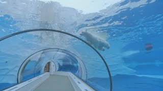 Horizon explores the existence of Zoos - Horizon: Should We Close Our Zoos? - BBC Two thumbnail