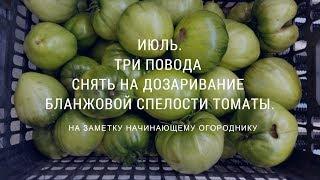 Три повода снять на дозаривание томаты бланжевой спелости